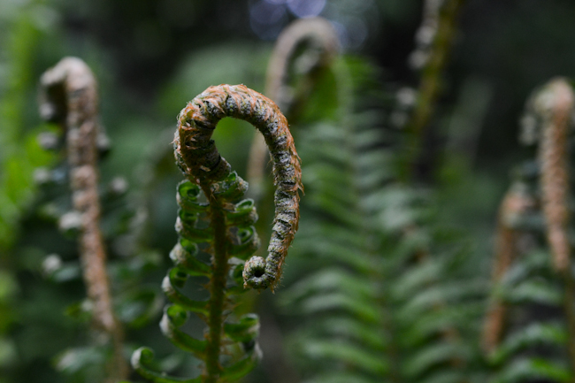 sword fern // Wayward Spark