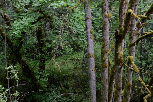 forest // Wayward Spark