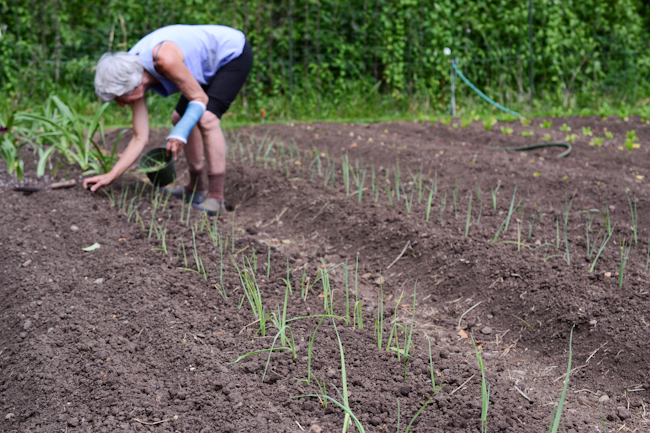 planting leeks at Oven & Earth Farm // Wayward Spark