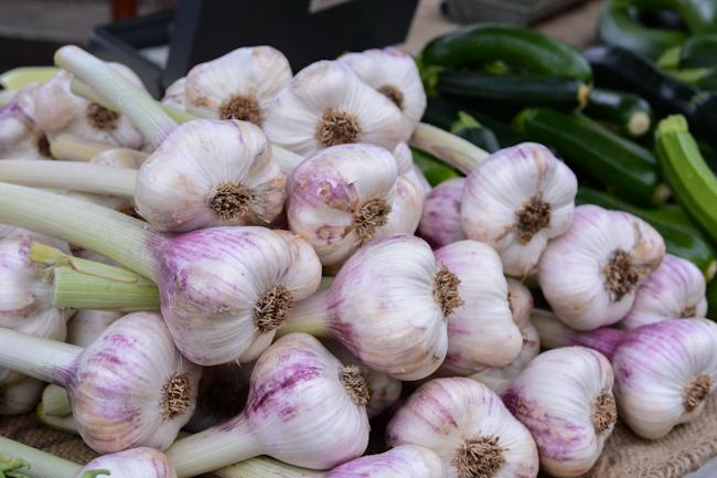 garlic // Wayward Spark