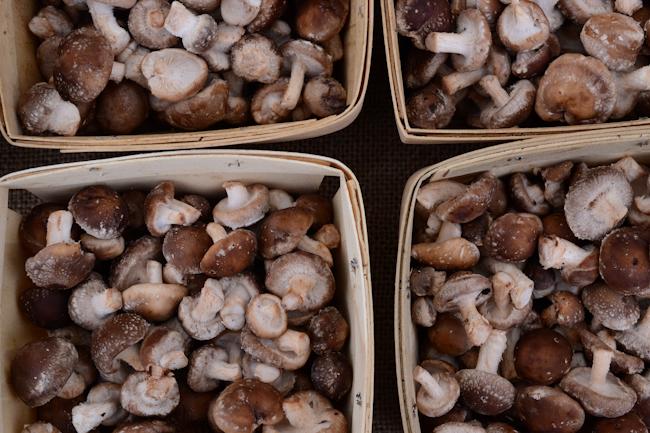 mushrooms // Wayward Spark