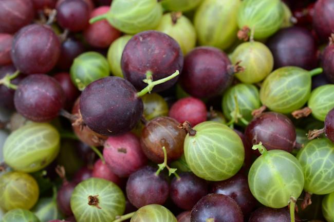 gooseberries // Wayward Spark