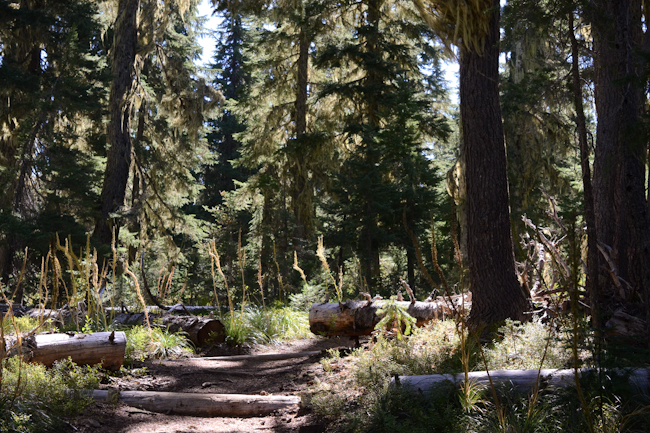hiking trail // Wayward Spark