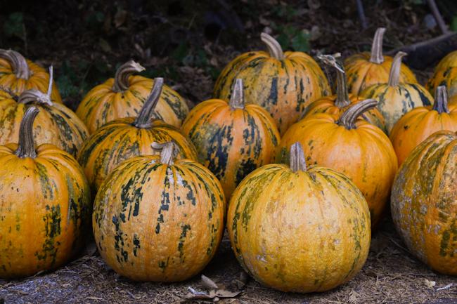 hull-less seed pumpkins // Wayward Spark