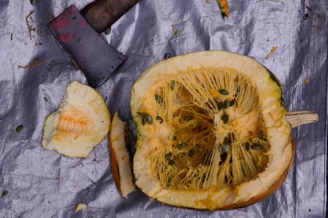 hull-less seed pumpkin harvest // Wayward Spark