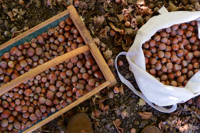 gathering hazelnuts // Wayward Spark