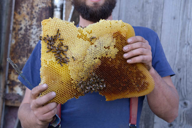 honeycomb // Wayward Spark