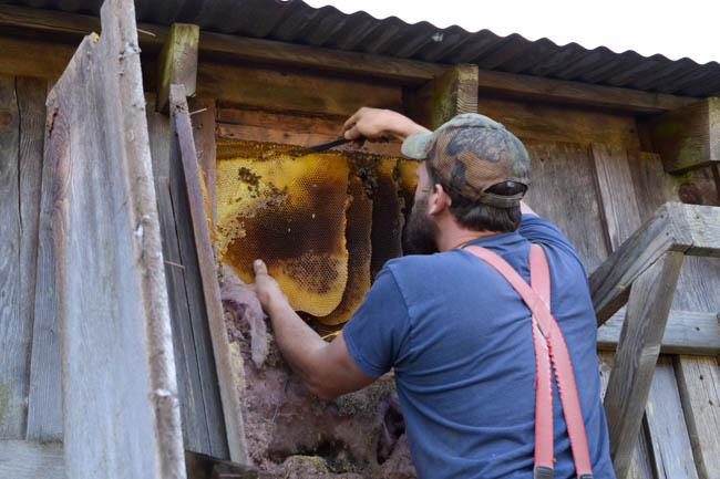 honeybee removal // Wayward Spark