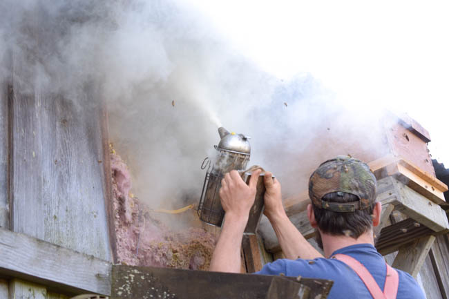 smoking honeybees during a removal // Wayward Spark