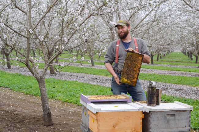 Henry Storch beekeeper at Old Blue Raw Honey // Wayward Spark
