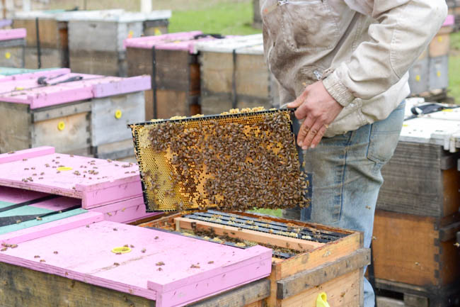 Old Blue Raw Honey hive inspection